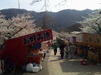 2011sakura1_2